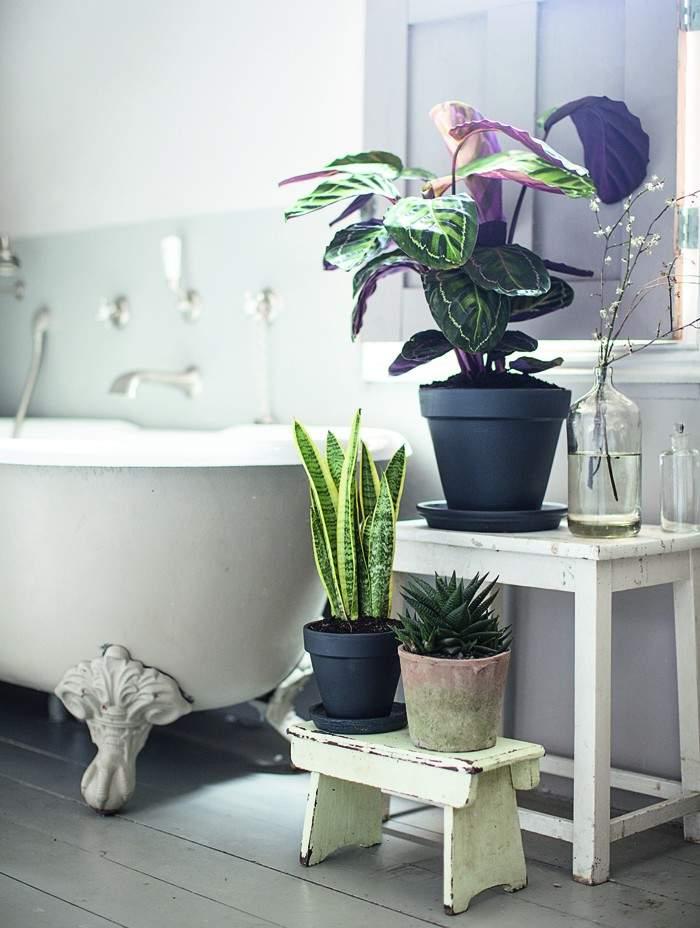 Isabelle-Palmer-The-House-Gardener-Gardenista-05
