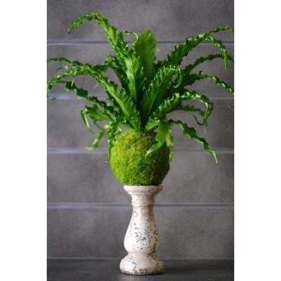 Quelles plantes pour ma salle de bains - Plante pour salle de bain sombre ...