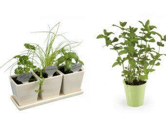 Comment bien entretenir sa Plante d'intérieur