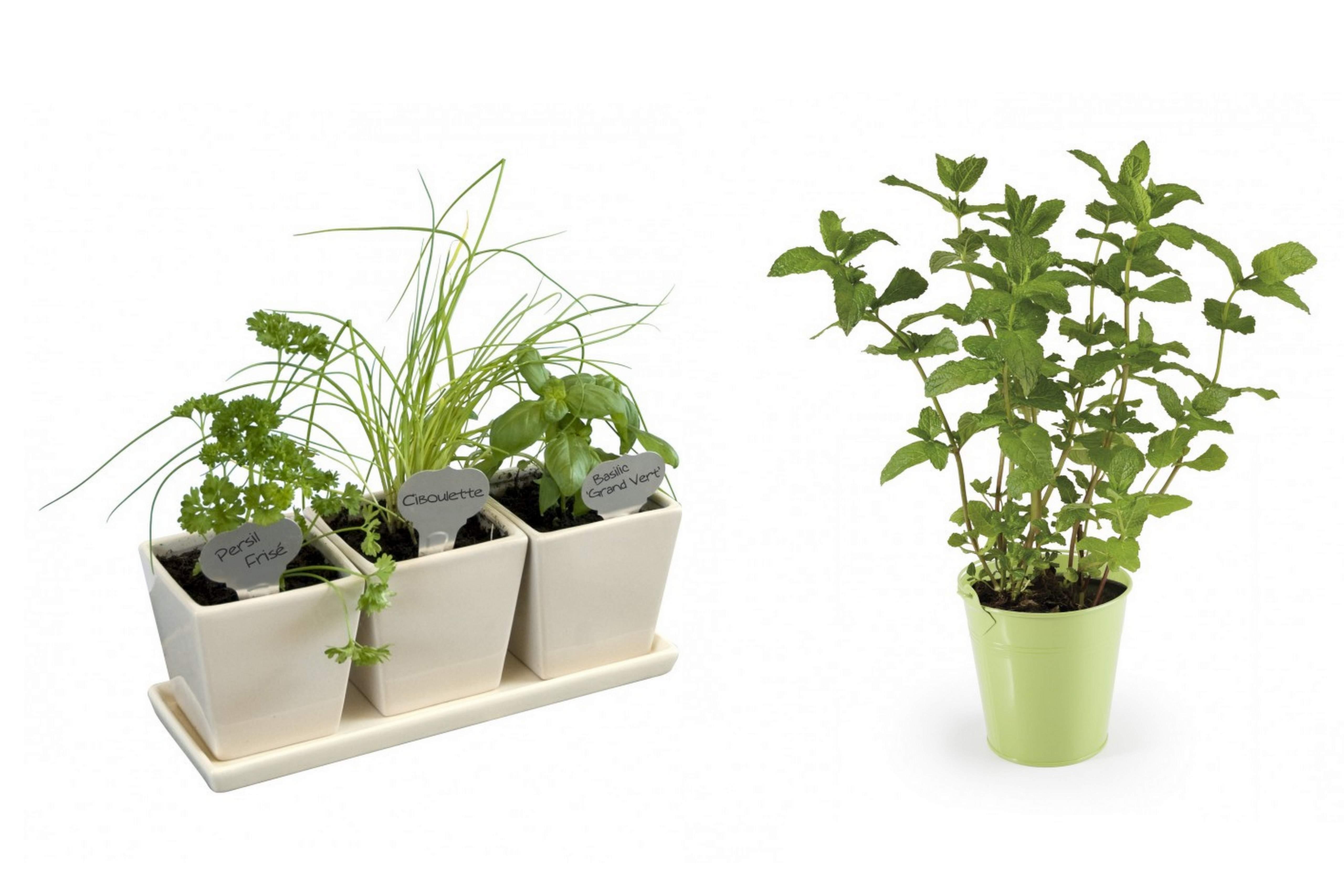 comment-bien-entretenir-sa-plante-dinterieur