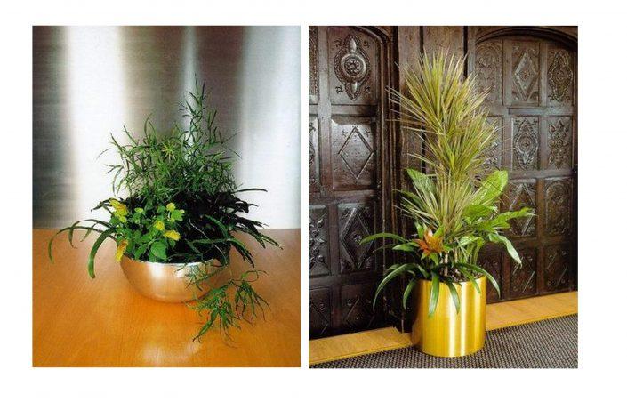 Comment bien entretenir sa plante d 39 int rieur - Plante d interieur facile a entretenir ...