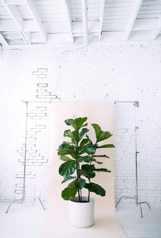 plante de salle de bain