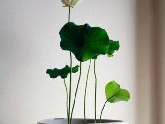 Comment choisir une plante d'intérieur