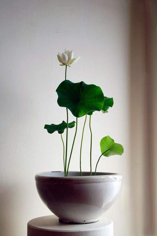 comment-choisir-une-plante-dinterieur