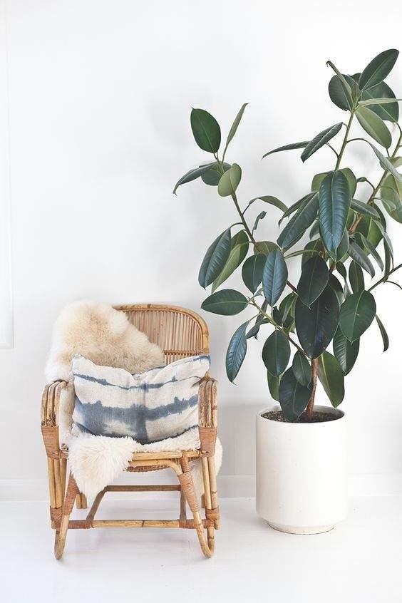 plante dans nos intérieurs