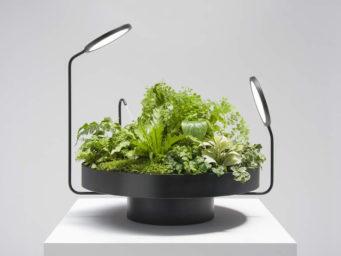Quand les luminaires rencontrent les végétaux : le nouveau concept du Studio Figuera/Goula
