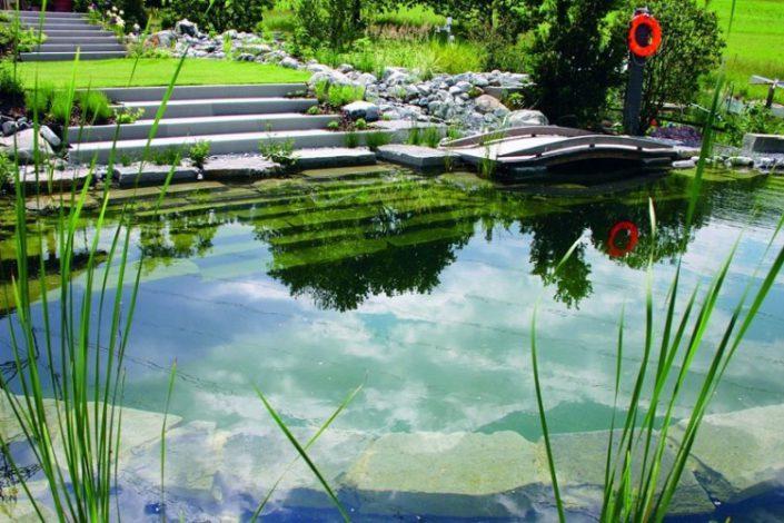 bassin ecologique zurich