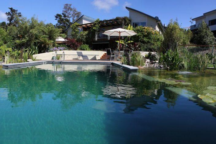 piscine naturelle perdue dans la vegetation