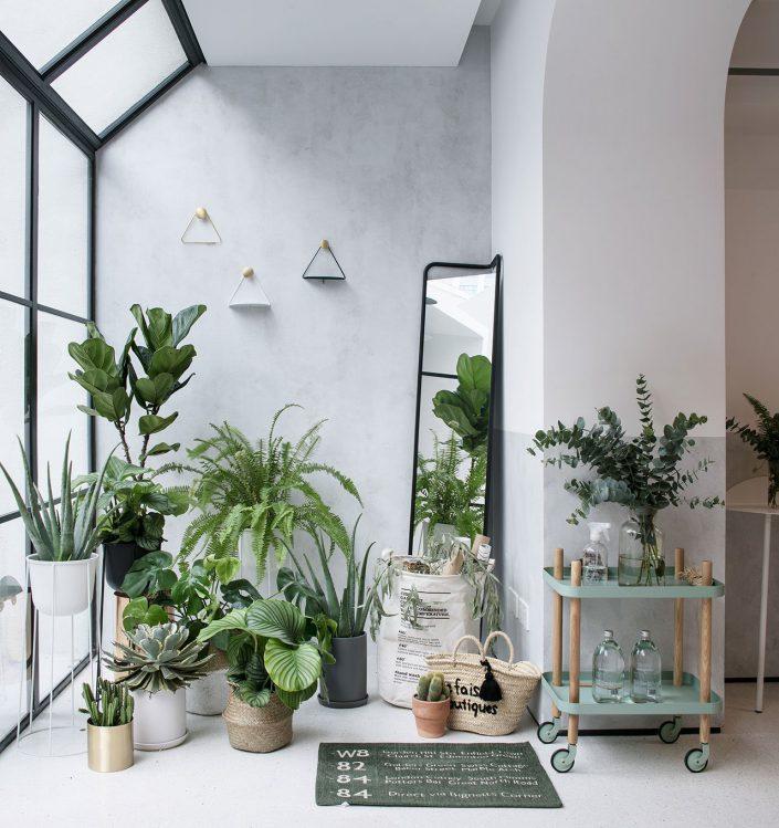 un coin vert dans la maison chinoise